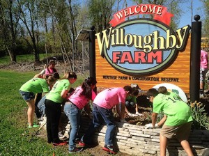 Some of the 2014 Collinsville Middle School Hoolos working at Willoughby Farm / submitted photo